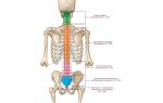 Причины и признаки перелома позвоночника у взрослых и детей