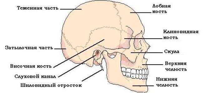 перелом черепа начало