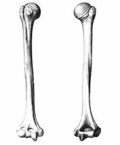 Повреждение костей надплечья и плеча плечевого сустава