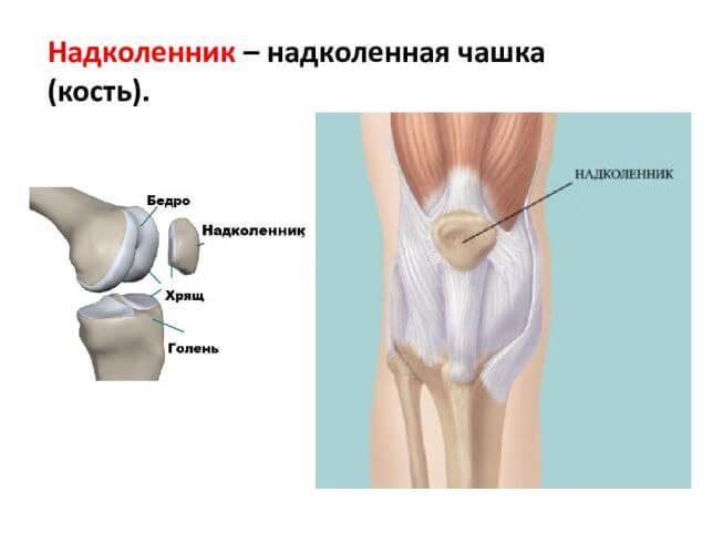 строение колена (чашечка)