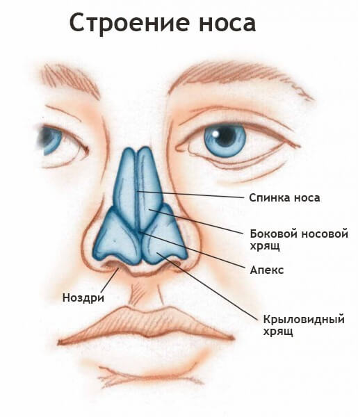 Как выпрямить нос после перелома